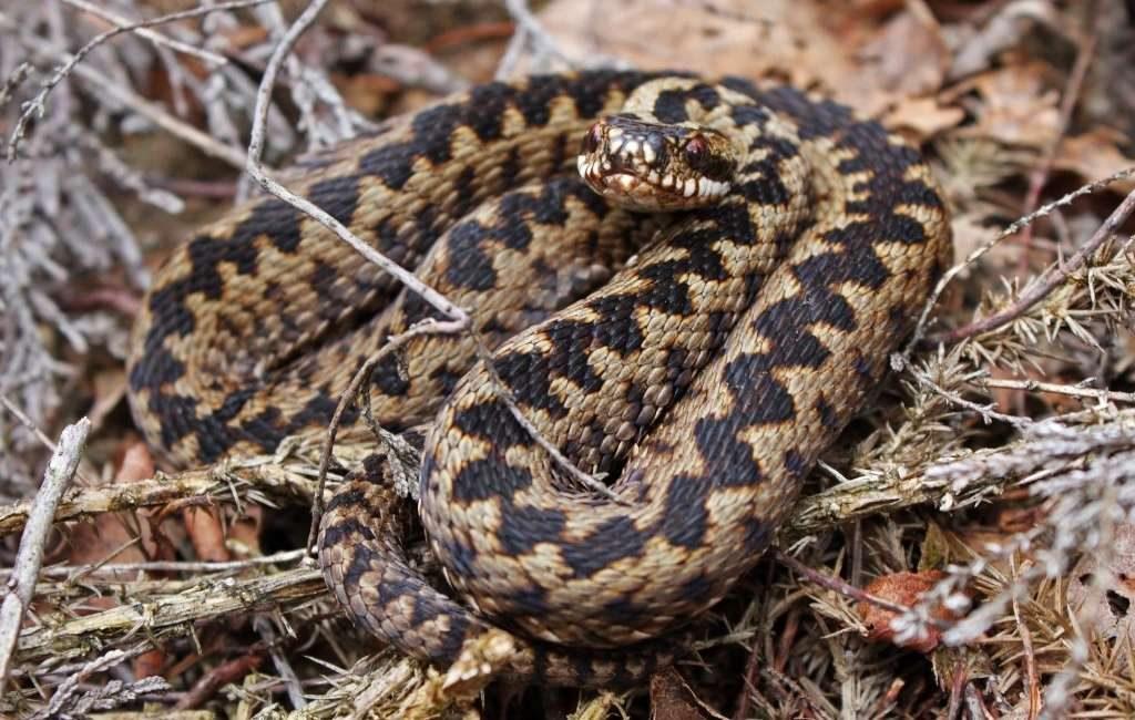 16 julio es Día Mundial de la Serpiente