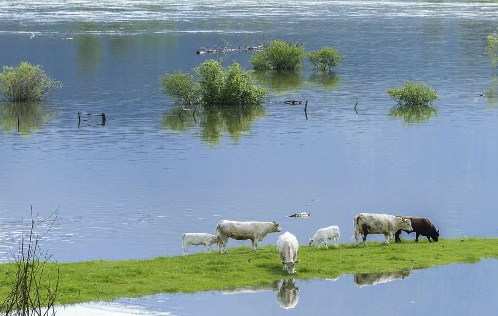Varios pueblos y ciudades de Alemania, Bélgica, los Países Bajos y Luxemburgo muy afectados por las graves inundaciones