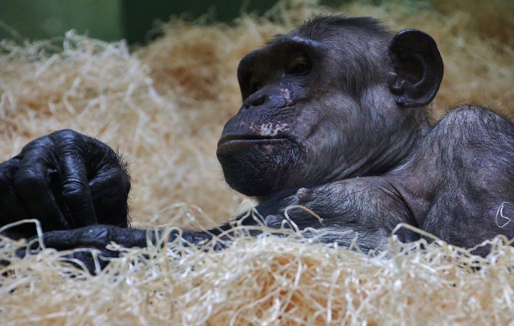 El zoológico de Amberes almacena muestras biológicas de animales de los zoológicos europeos.