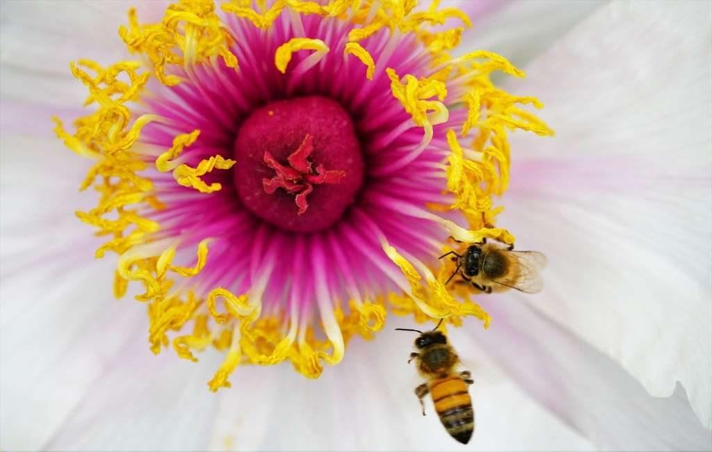 Número récord de abejas contadas durante el Censo Nacional en los Países Bajos.