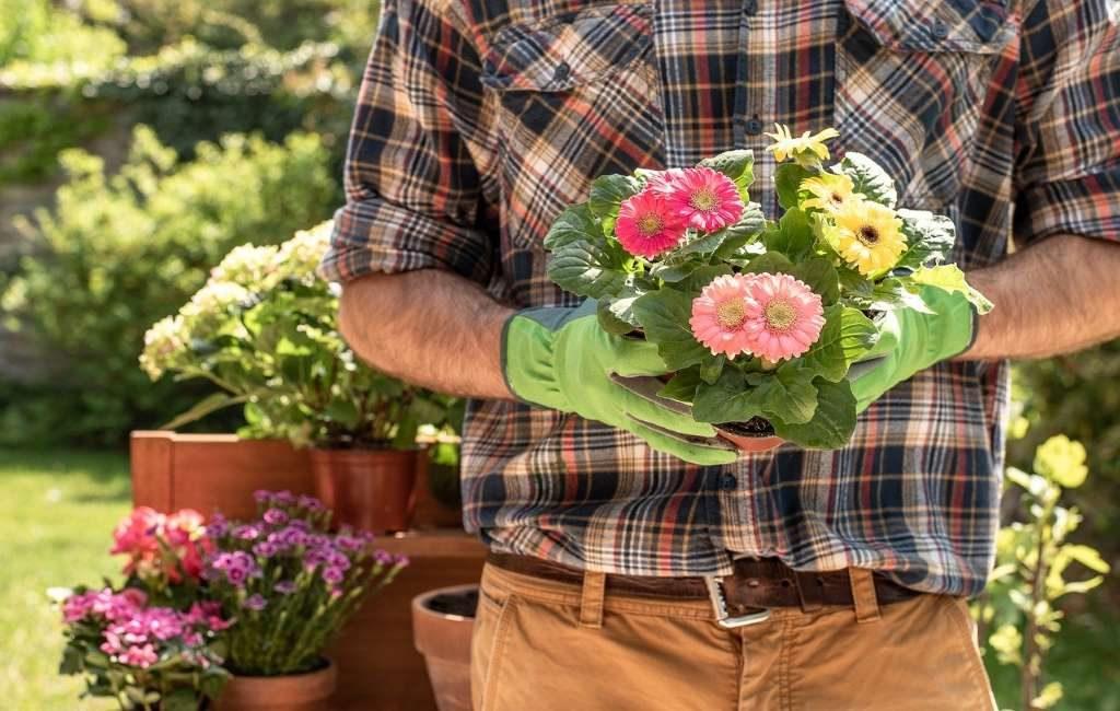 El número de jardineros, en los Países Bajos, ha crecido.