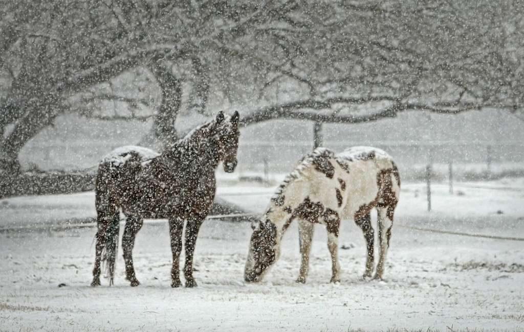 Nieve en los Países Bajos (Holanda)