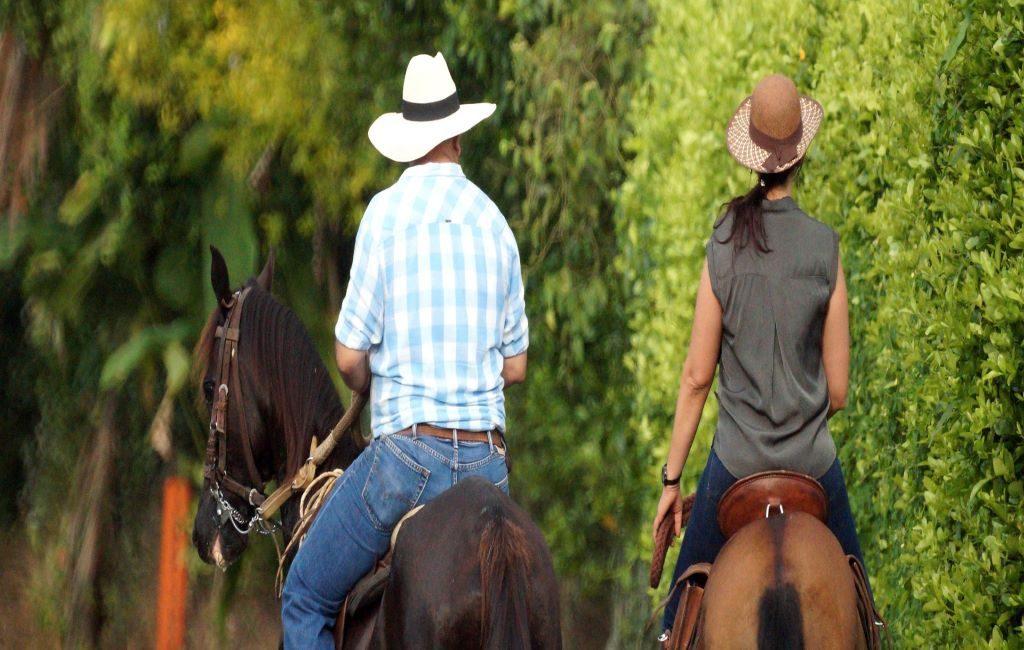 Cada vez, hay más personas en los Países Bajos que compran o adoptan caballos y/o ponys.