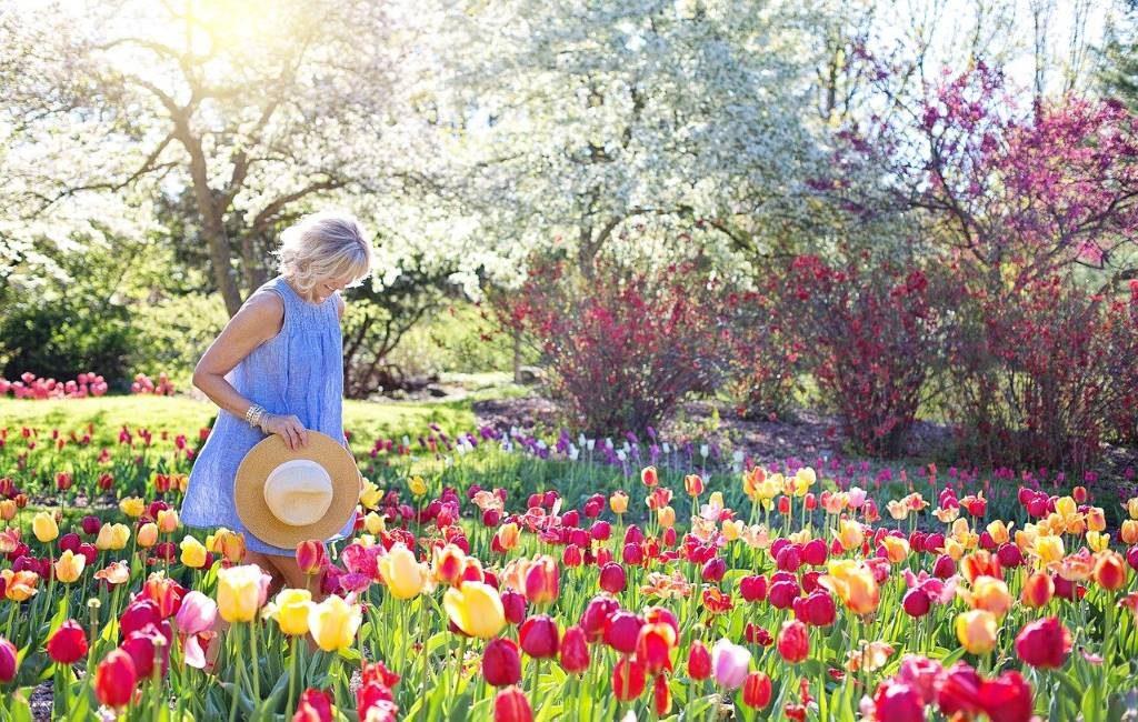 Conoce los 10 mejores sitios para ver campos de flores en los Países Bajos (Bloemvelden)