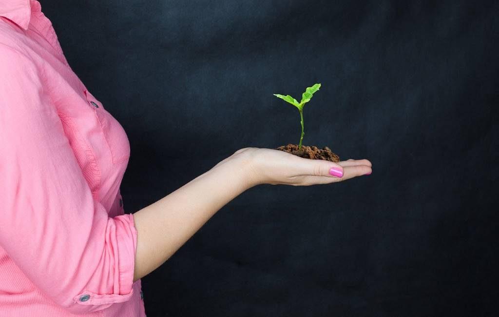 Árbol gratuito para los residentes de La Haya para hacer la ciudad más verde.
