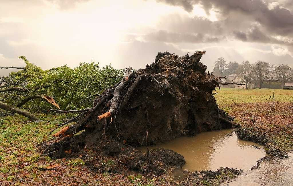 La tormenta Bella (Storm Bella) atraviesa Bélgica de Oeste a Este, con ráfagas de viento muy fuertes.