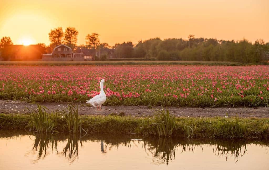 Diferencia entre Países Bajos y el Reino de los Países Bajos.