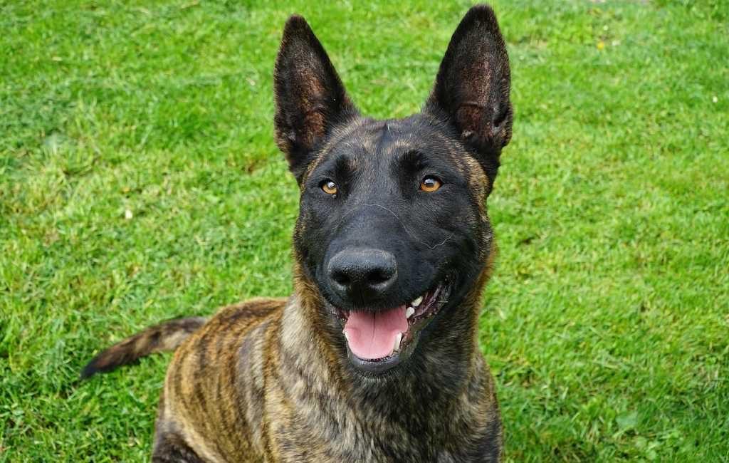 Un perro de policía holandés encuentra polizones en un tráiler
